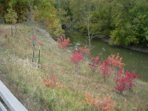 Current Kingfisher Bluff with Foliage