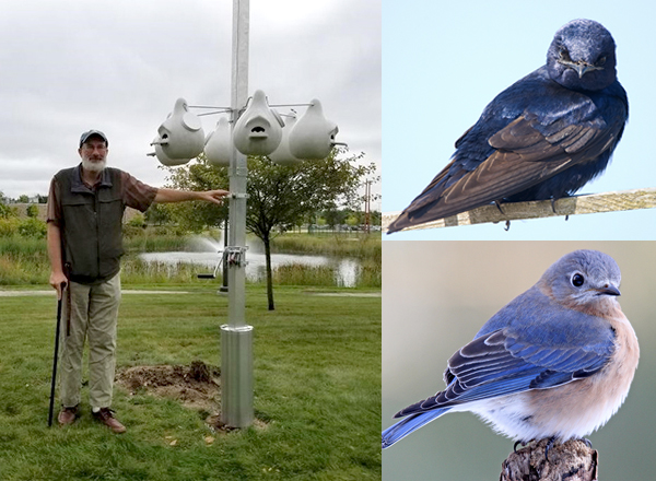 HFC biology instructor Stewart Vining stands next to the newly-installed purple martin pole. It has a crank for easy gourd maintenance. The bird pictured at upper right is a purple martin. At lower right is a bluebird.