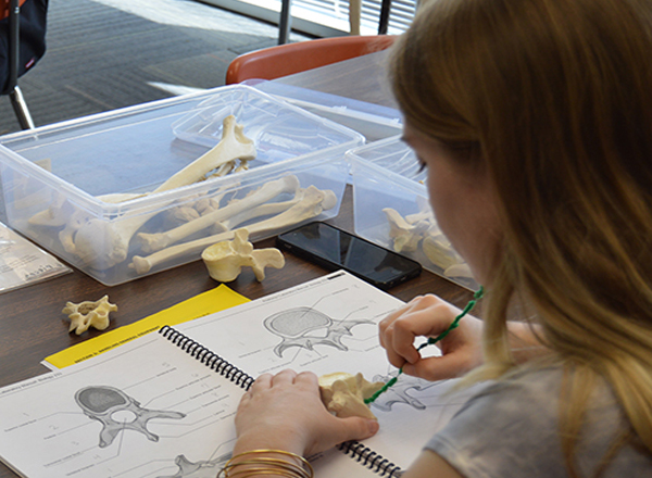 Photo of student studying in the Bone Room