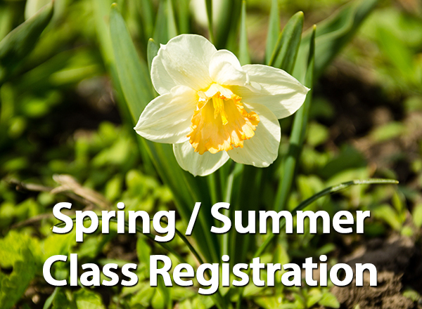 Photo of daffodil, spring/summer class registration