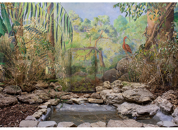 This photo is one of several HFC alumna Chelsea Rook has on display at the Albrecht-Kemper Museum of Art in Missouri.