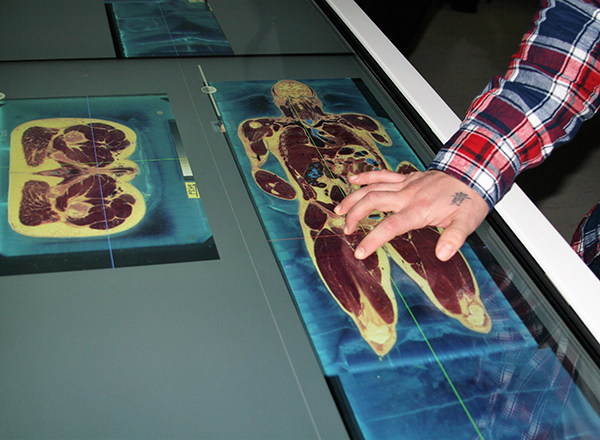 Virtual Cadaver Allows Dissection Without A Body Henry Ford College